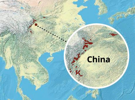 Giant panda range map