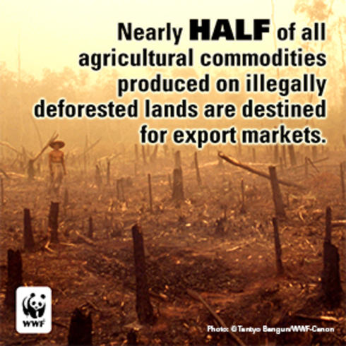 Illegal Deforestation Commodities