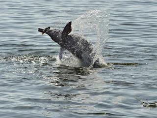 Dolphin Magazine Summer2017