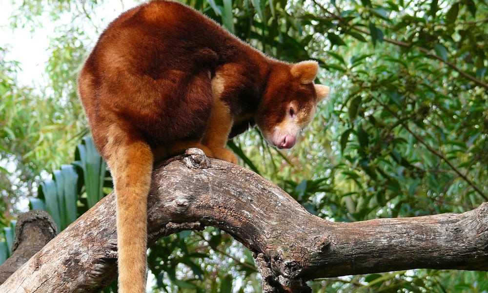 Living among the trees: Five animals that depend on forests