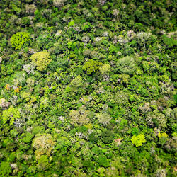 Amazon forest aerial