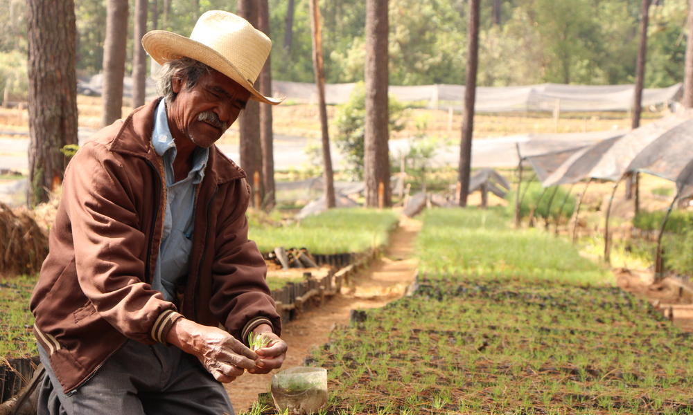 a man planting