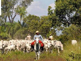 man horse cattle