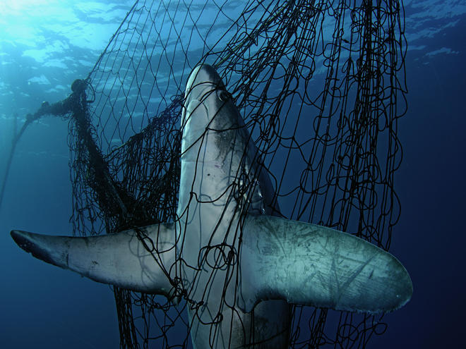 Wild caught seafood impacts