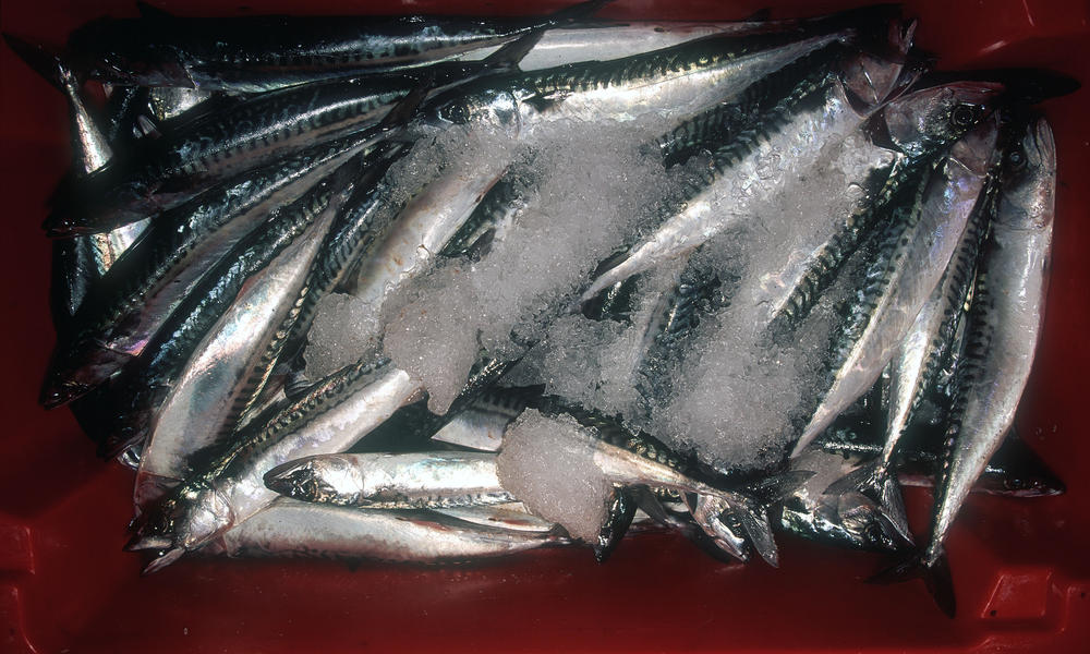 MSC certified handline caught mackerel