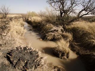 A spring in the desert