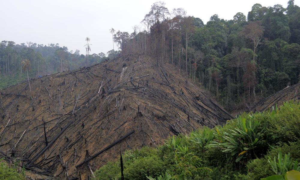 Sumatran Orangutan | Species | WWF