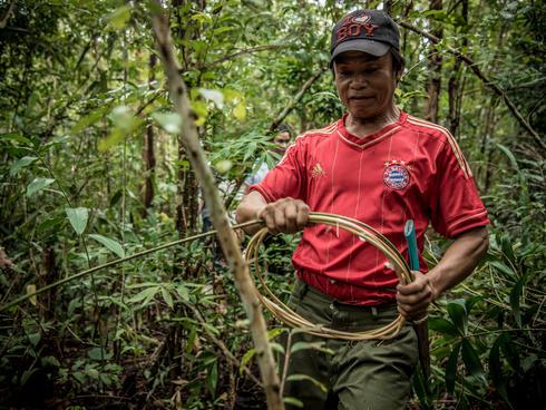 A villager harvesting rattan cane.
