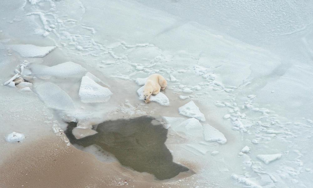Polar bear lying on the ice