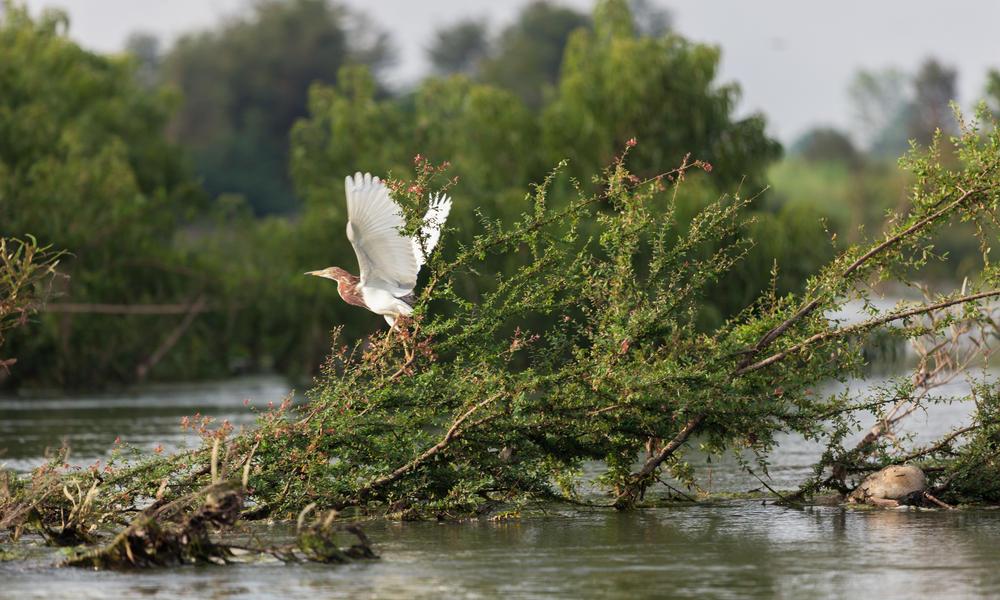 bird in Stung Treng, Cambodia