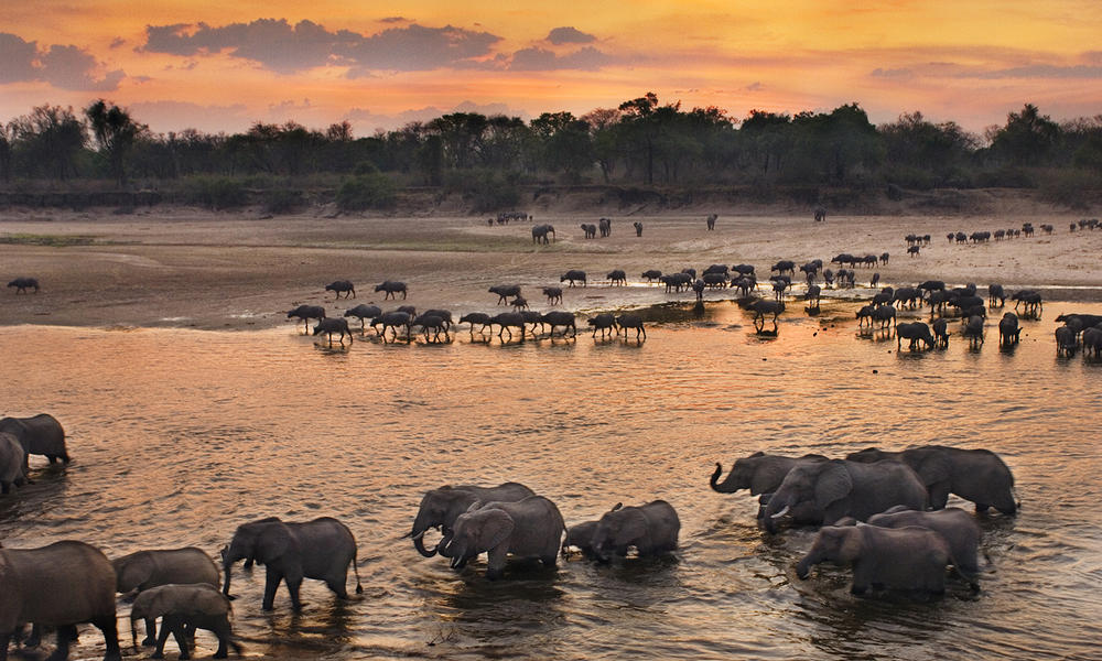 Elephants congregate on the banks of the Luangwa River, Zambia