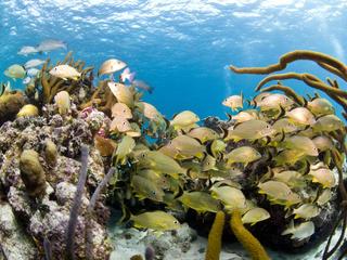 Fish in the ocean in Belize.