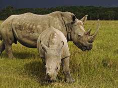 Rhinos_main_8.6.2012_stengthening_law_enforcement_hi_112396