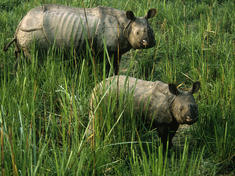 Rhinos main 8.6.2012 threats hi 108001