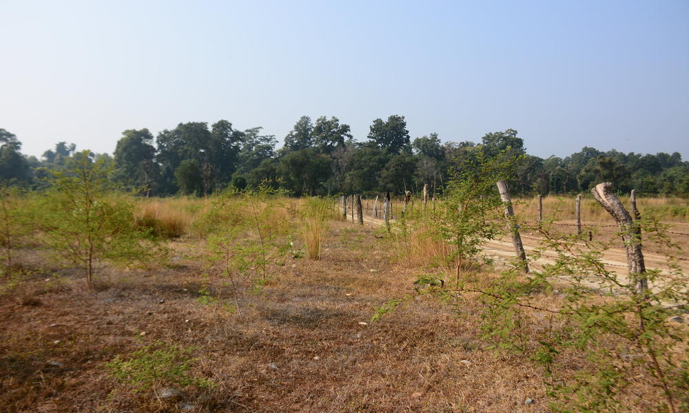 Afforestation site.