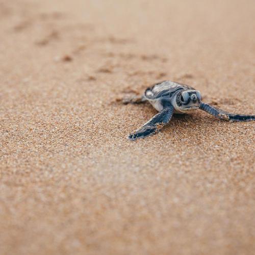 Species | Protecting Wildlife | World Wildlife Fund