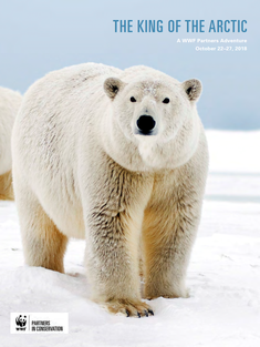 The King of the Arctic Brochure Cover