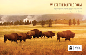 Where the Buffalo Roam Brochure Cover
