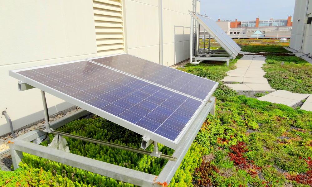 WWF green HQ - solar panels on green roof