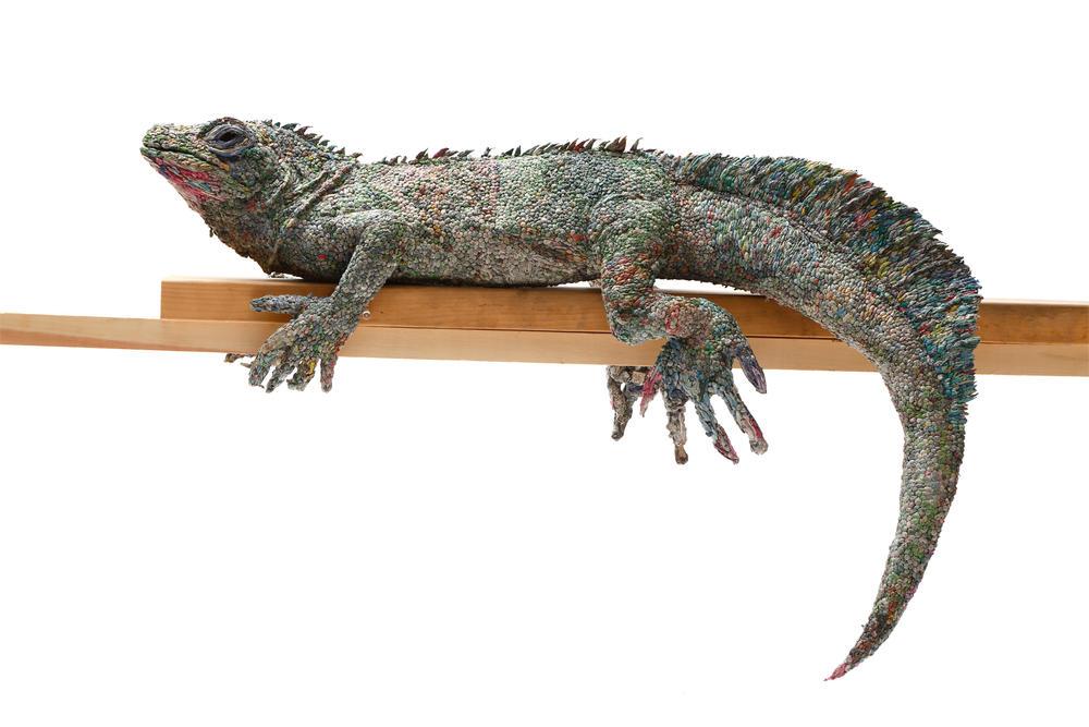 Gallery lizard winter2017