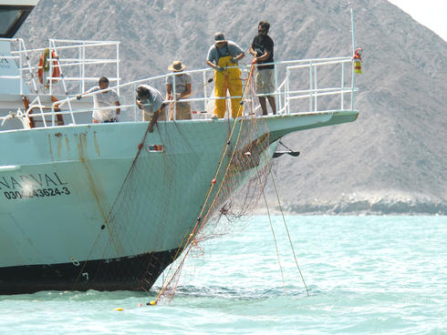 net retrieval in Gulf of Mexico to protect vaquita