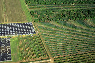 Aerial of land cultivated for farming, near the Everglades. Everglades, Florida, United States.