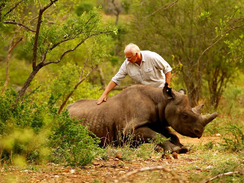 Dr Jacques Flamand, leader of the WWF Black Rhino Range Expansion Project in South Africa, has just administered an antidote to wake up a black rhino which has been released on to a new home
