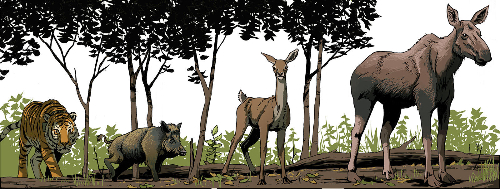 Boar, red deer and moose