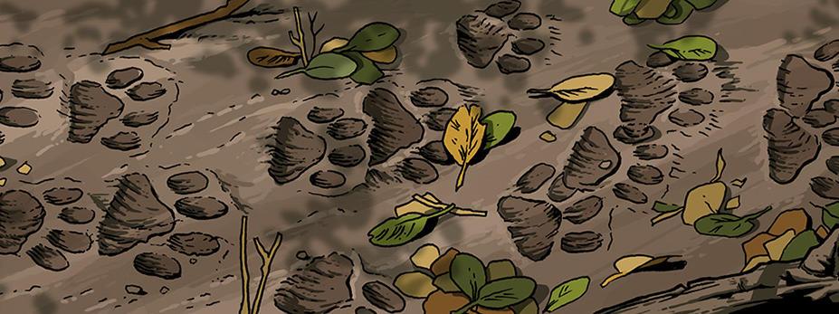 paw prints on muddy ground