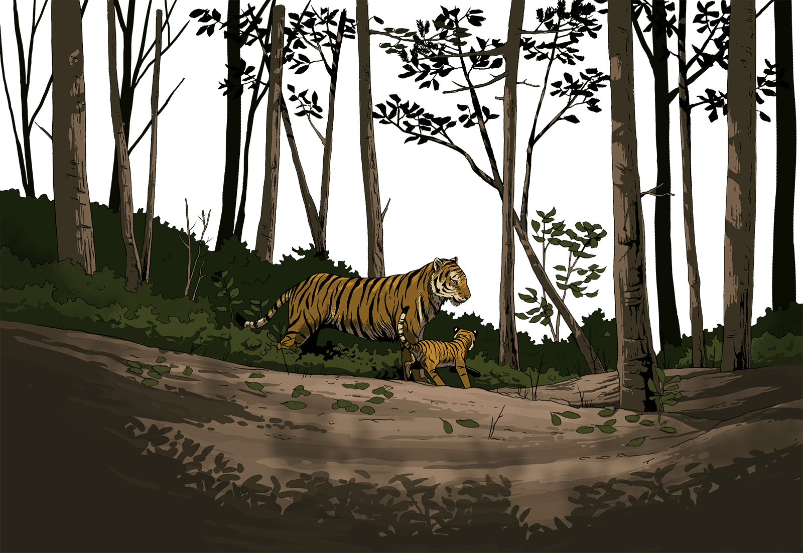 Tigers walking through the forest