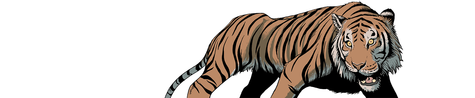illustrated tiger in a cautious stance looking to left