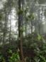 Forestblog3