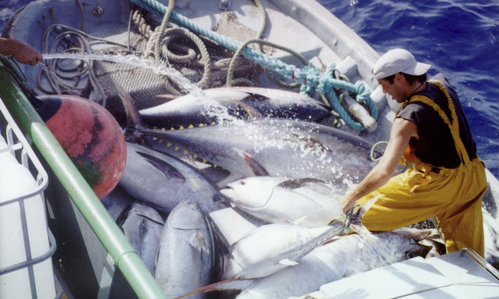 tuna fishing gulf of mexico