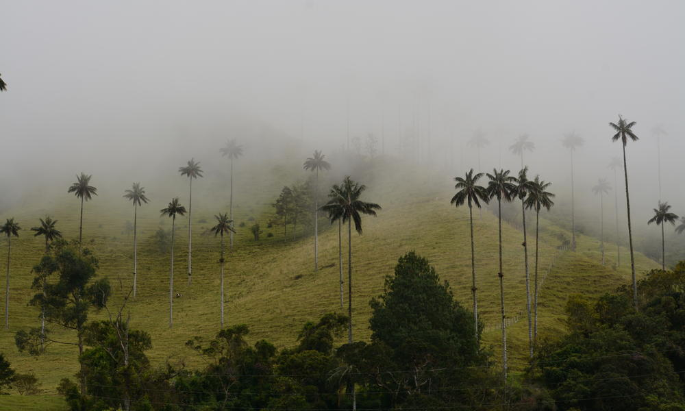 Heritage Colombia  Nathab Palms