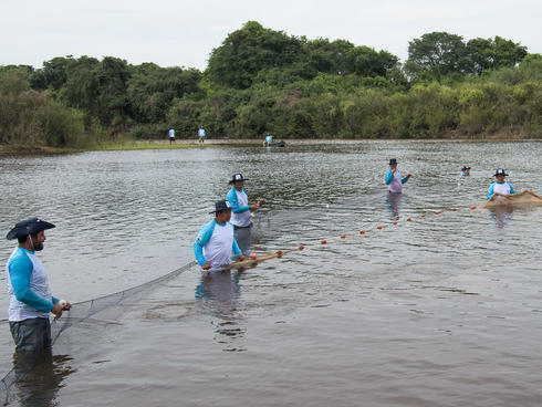 Scientists safely capture a river dolphin