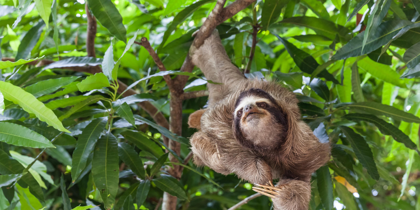 what is threre diet of sloth