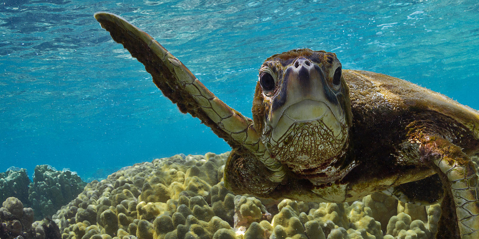 Image result for giant sea turtle