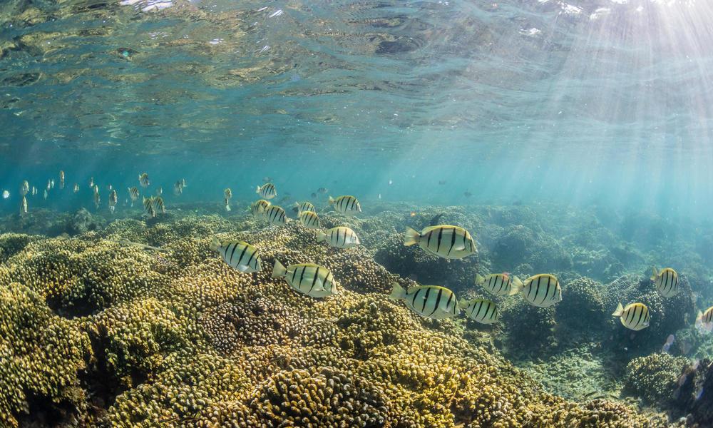 Underwater Cabo Pulmo