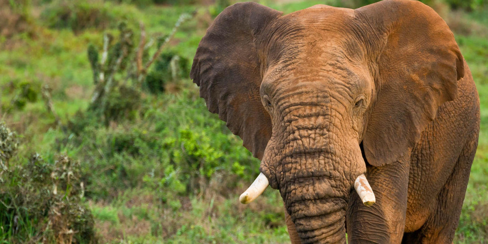 How Many Muscles Does An Elephants Trunk Have And 6 Other Elephant
