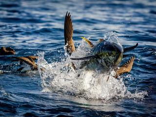 tuna spring2018