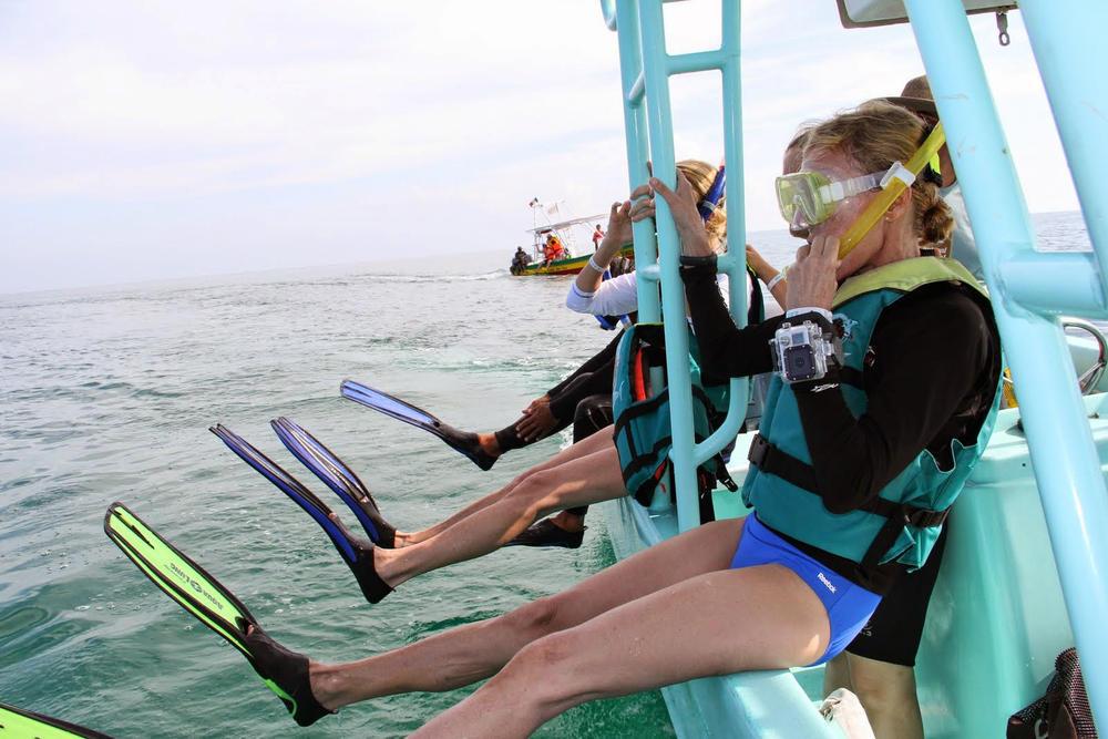 whaleshark snorkel spring2018
