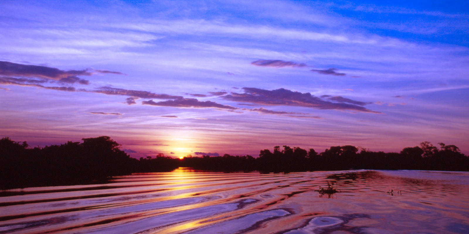 5 Interesting Facts About The Pantanal The World S Largest Tropical Wetland Stories Wwf
