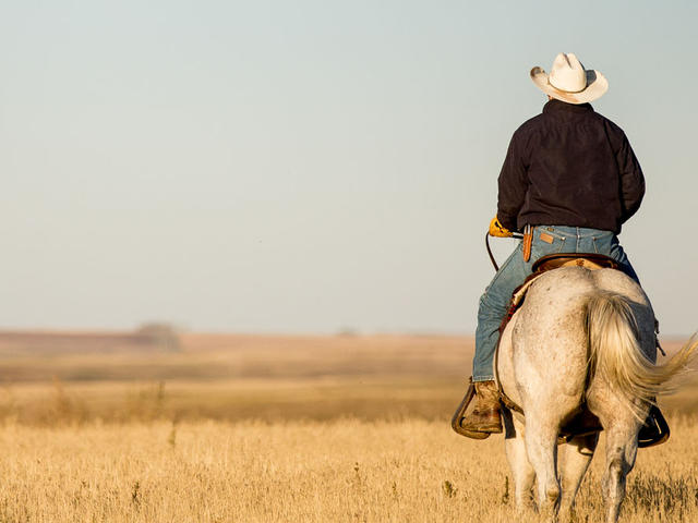 Rancher on a horse in the grasslands