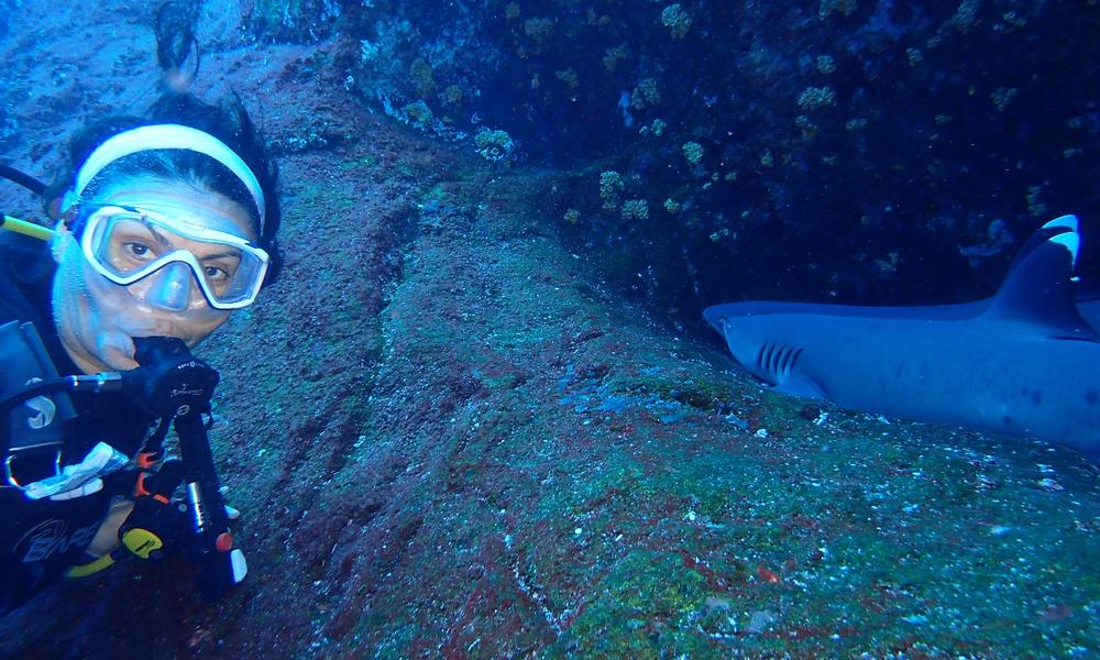 Georgina Saad scuba diving and posing with a resting whitetip shark.