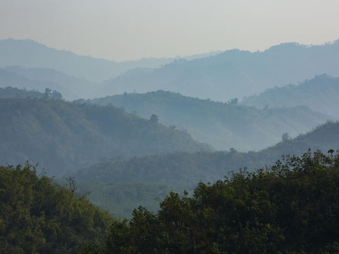 Myanmar forest