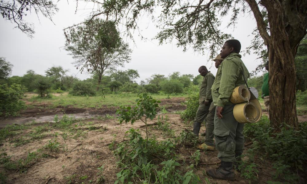 elephant collaring team tracks elephant