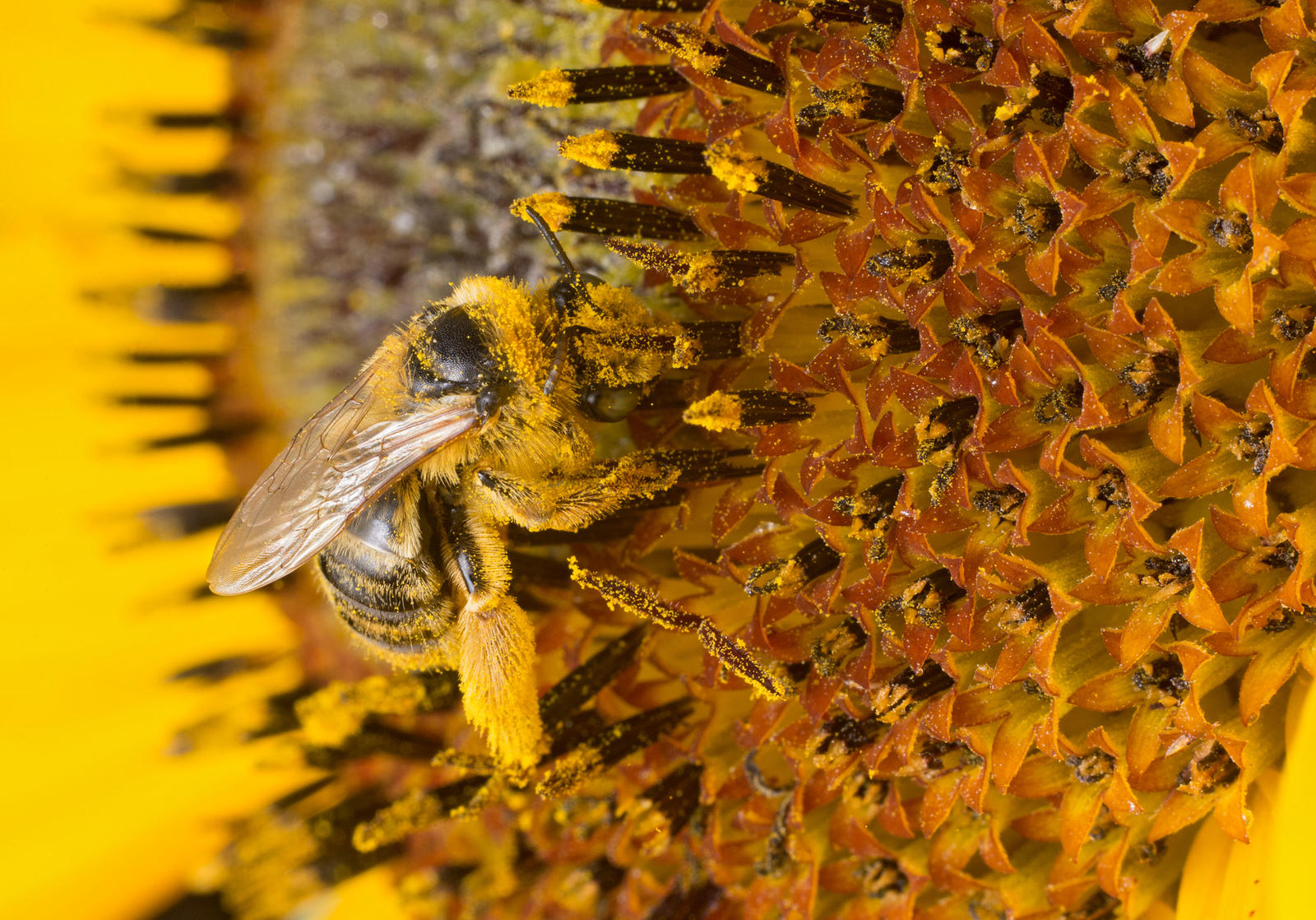 reveal pollen summer 2018