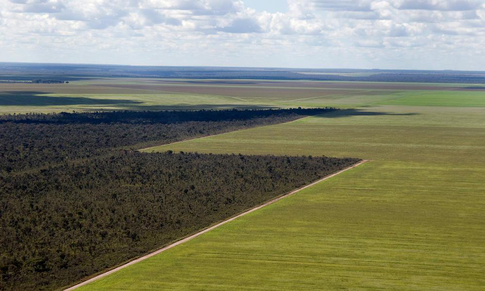 granchaco deforest landscape summer2018