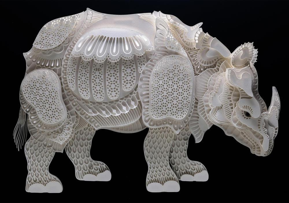 Cabral rhino summer2018