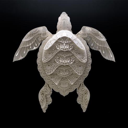 cabral turtle summer2018
